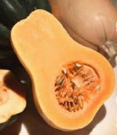 Organic Bio Pompoen Waltham Butternut