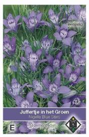 Nigella garidella Blue Stars - Juffertje in het Groen