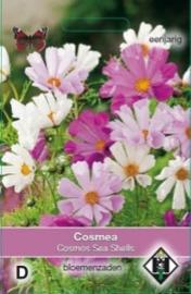 Cosmos Rosetta