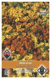 Tagetes tenuifolia Starfire Mix - Afrikaan