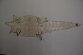 Krokodillenleder wit metallic.