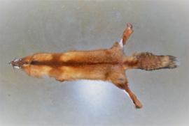 Vossenhuiden roodvossenhuid