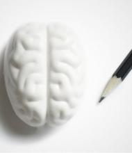Brein gum