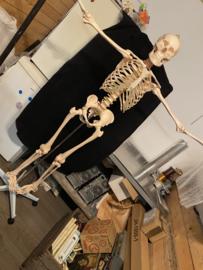 Skelet groot