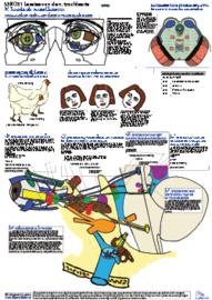 05a ANSONS + GRATIS posterset