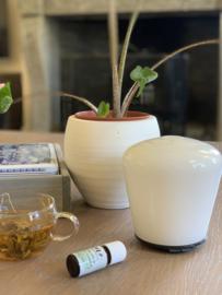 Glazen aroma diffuser mush wit