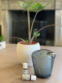 Glazen aromadiffuser Mush grijs
