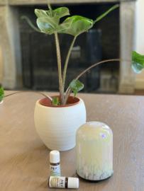 Glazen aromadiffuser Dom Dot