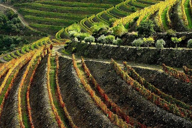 Portugal en zijn druivenrassen