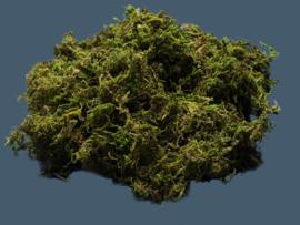10-104 Scenic moss