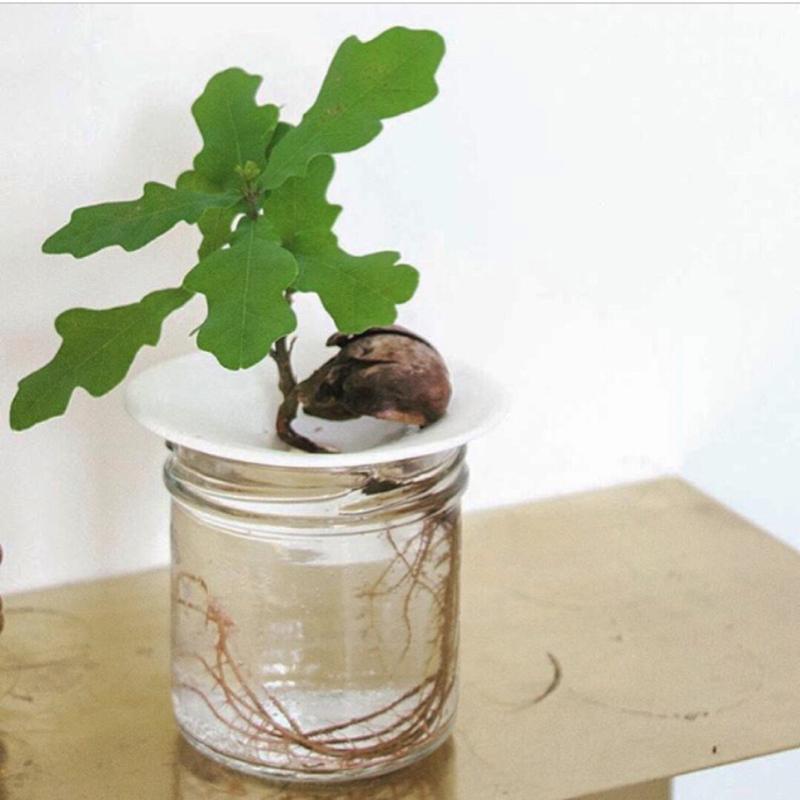 Kweekschotel Grow Up van Sprout in maat large