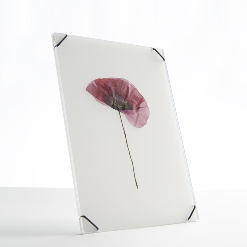 Hueframe van Studio Carmela Bogman, transparant white, maat M