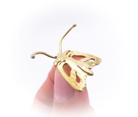 Vlinder van de nacht