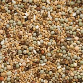 Sierduiven zonder mais