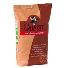 Cavom pup/junior
