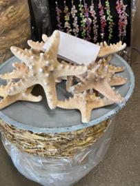 Philippine starfish 10-15 cm