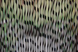 SIENNA1 120x230cm zwart-transparant