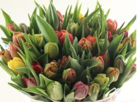 Boeket tulpen - Fleur et Fiori