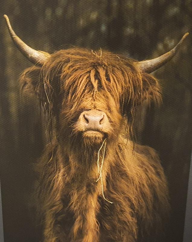 Tuinposter xxl  bizon