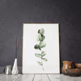 Mini poster A5 - Eucalyptus
