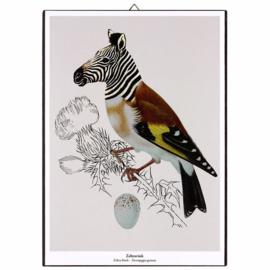 Schilderijtje New Species 'Zebravink' - De Beeldvink