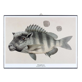 Schilderijtje New Species 'Schaapsbrasem' - De Beeldvink