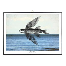Schilderijtje Nautische print 'Vliegende vis' - De beeldvink