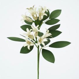 Paper Eden Jasmine - Jasmijn / Papieren kunstbloemen
