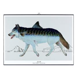 Schilderijtje New Species 'Zeewolf' - De Beeldvink