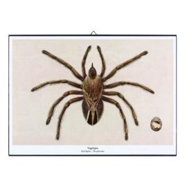 Schilderijtje New Species 'Vogelspin' - De Beeldvink