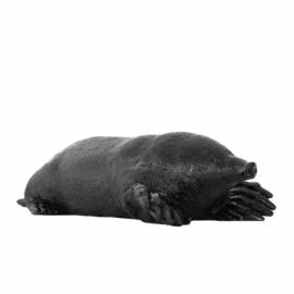 Mol zonder molshoop - Ottmar Horl