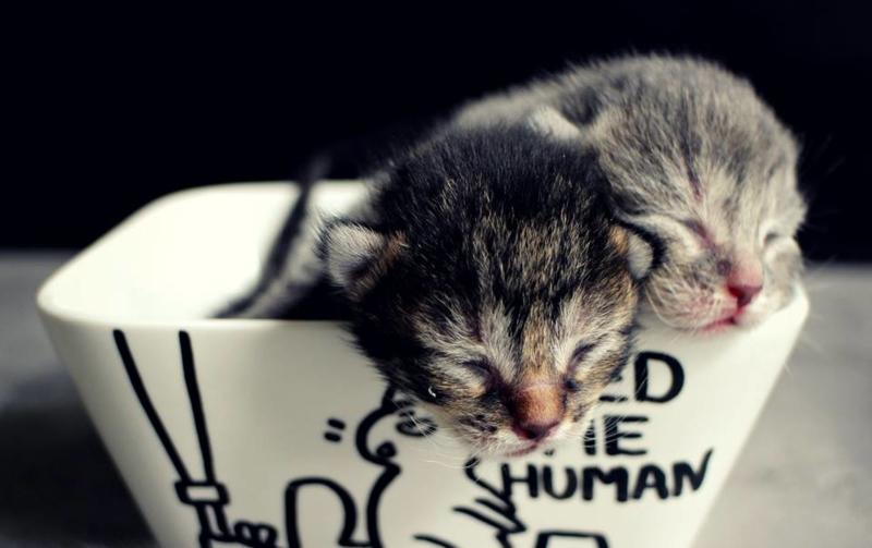 Kittens en voederbakjes