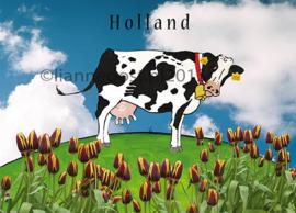 Holland koe-ansichtkaart