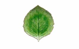 Schaal in de vorm van een blad - groot