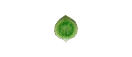 CostaNova schaal blad Hydrangea leaf (17cm)