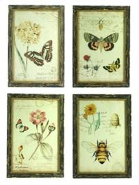 4x Lijstje hout Botanisch, 4 ass. (21x31) 23,5x2x33,5cm