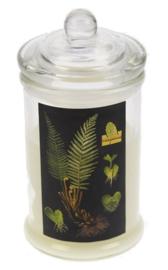 Glazenpot met Kaars deksel, Varen Ø7,5x16cm lavendel