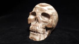 Versteend hout human skull