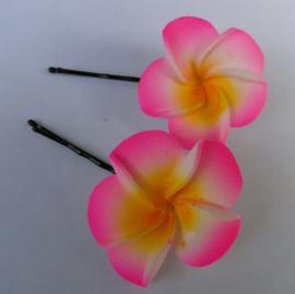 Frangipani schuifspeldjes per twee verpakt roze.
