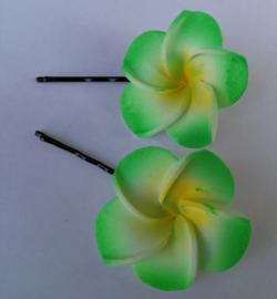 Frangipani schuifspeldjes per twee verpakt groen.