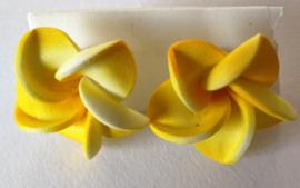 Frangipani oorstekers geel
