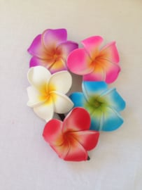 Haarspeldje Frangipani bloem groot. Met brede plastic schuif. Per stuk. Kleuren kunnen verschillen met het voorbeeld. In rood, geel, groen, wit en paars.