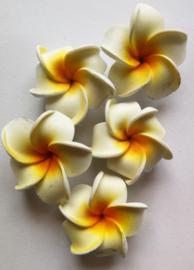 Zakje met 5 koelkastmagneetjes met de heilige  Balinese Frangipani bloem.  DIT ARTIKEL KAN PAS OP 7 OKTOBER WORDEN VERZONDEN.