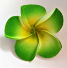 Haarspeldje Frangipani bloem groen, diameter 6 cm. Met brede plastic schuif. Levering uit assorti.