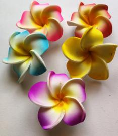 Zakje met 5 koelkastmagneetjes met de heilige  Balinese Frangipani bloem.