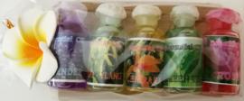Treetje van Sawohout met 5 olietjes van 4,5 ml. Lavendel, Ylang Ylang, Cempaka (Magnolia), Green Tea en Rose. Voor gebruik in een brandertje of verdamper.