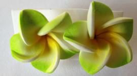 Frangipani oorstekers groen