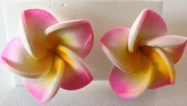 Frangipani oorstekers roze