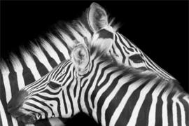 AluArt Kunstwerk - Zebra
