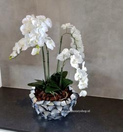 Schelpenvaas Bowl opgemaakt op met orchidee - zilvergrijs
